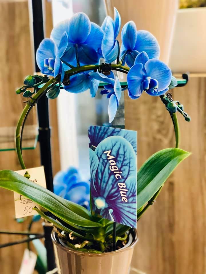 fleuriste-orchidees-ponto