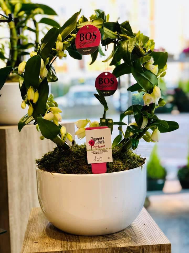 orchidee-ponto-fleuriste