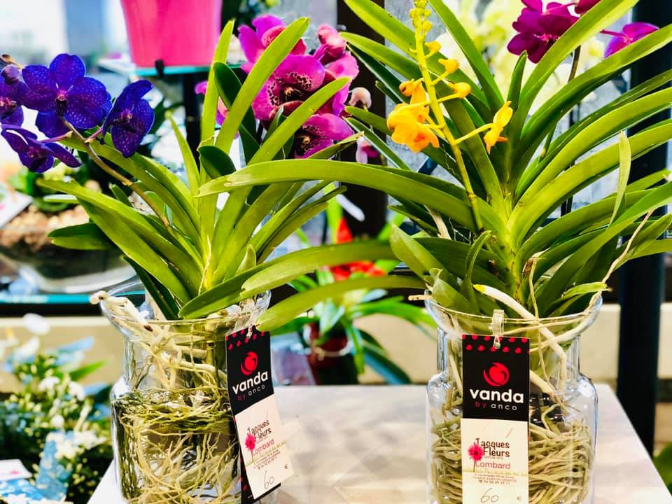 orchidee-vanda-jacques-fleurs-lombard