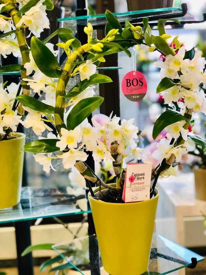 orchidees-ponto-fleuriste